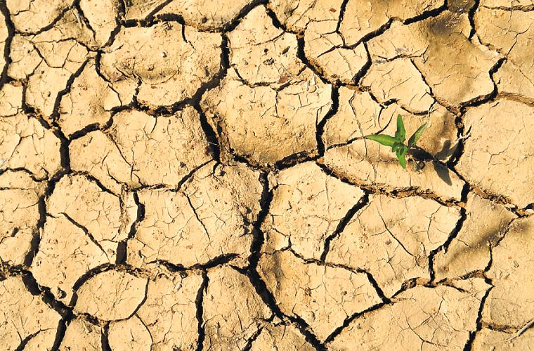 Dry, cracked earth in a field